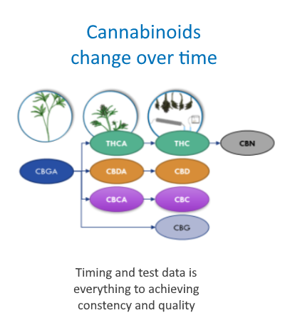 Cannabinoids change over time info graphic